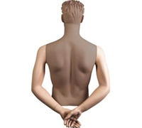 Male Mannequin Arms: Hands Behind Back - Fleshtone